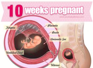 Tìm hiểu về thai nhi tuần thứ 10