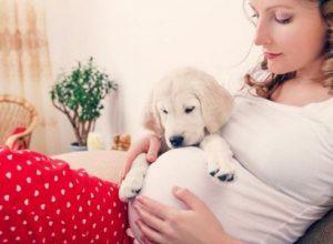 Tư vấn phụ nữ mang thai có nên nuôi thú cưng không?