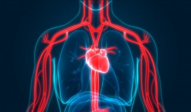 Cách thải độc trong máu : Những vị thuốc tự nhiên giúp thải độc máu hiệu quả